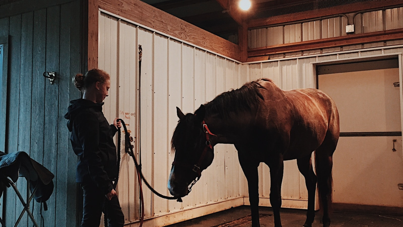 Top Reasons to Choose Steel Stables for Your Equestrian